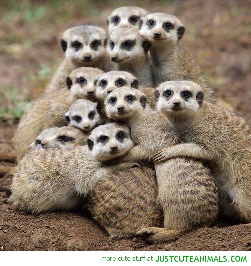 [Image: meerkat-pictures-cute-beautiful-animal-pics.jpg]