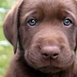 Blue_Eyed_Dogs_2.jpg