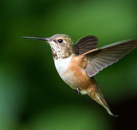 The Colibri. Photo by Mick Thompson.