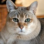 diane_cat.jpg